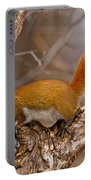 Red Squirrel Pictures 145 Portable Battery Charger
