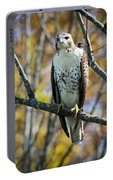 Red-tailed Hawk In The Fall Portable Battery Charger