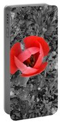 Red Tulip From Above Portable Battery Charger