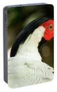 Redheaded Bird Portrait. Portable Battery Charger