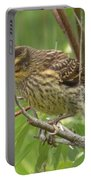 Redwing Blackbird - Immature Portable Battery Charger