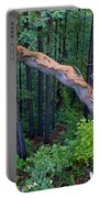 Redwood Forest Portable Battery Charger