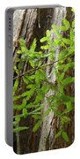 Redwood Tree Art Prints Baslee Troutman Portable Battery Charger