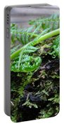 Redwood Tree Forest Fern Art Prints Ferns Giclee Baslee Trouman Portable Battery Charger