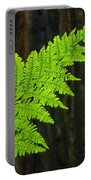 Redwood Tree Forest Ferns Art Prints Giclee Baslee Troutman Portable Battery Charger