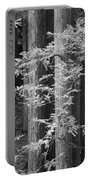 Redwoods Ir 0625 Portable Battery Charger