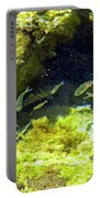 Reef Tide Pool Portable Battery Charger