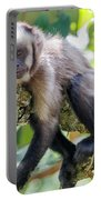 Relaxing Capuchin Monkey Portable Battery Charger