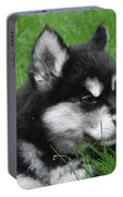 Resting Alusky Puppy Laying In Green Grass Portable Battery Charger