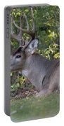 Resting Buck Portable Battery Charger