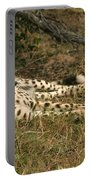 Resting Cheetah Portable Battery Charger