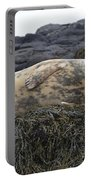 Resting Gray Seal On Seaweed Portable Battery Charger