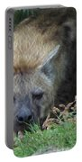 Resting Hyena Portable Battery Charger