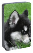Resting Two Month Old Alusky Puppy Dog In Grass Portable Battery Charger