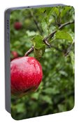 Ripe Apples. Portable Battery Charger