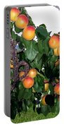 Ripe Apricots Portable Battery Charger