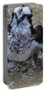 River Hawk Splashing Around In The Water Portable Battery Charger