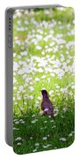 Robin In A Field Of Daisies Portable Battery Charger