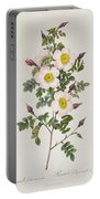 Rosa Pimpinelli Folia Inermis Portable Battery Charger by Pierre Joseph Redoute