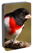 Rose-breasted Grosbeak Squared Portable Battery Charger