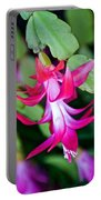 Rose-colored Christmas Cactus At Pilgrim Place In Claremont-california  Portable Battery Charger