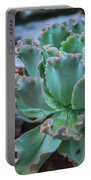 Echeveria Rosea  Portable Battery Charger