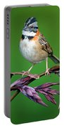 Rufous-collared Sparrow Zonotrichia Portable Battery Charger