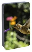 Rufous Or Allen's Portable Battery Charger