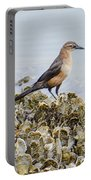 Rusty Blackbird #6 Portable Battery Charger