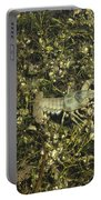 Rusty Crayfish At Night Portable Battery Charger
