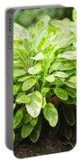 Sage Plant Portable Battery Charger