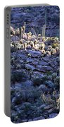 Saguaro Sunrise Portable Battery Charger