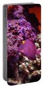 Salt Water  Aquarium Portable Battery Charger