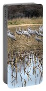 Sandhill Herd By Pond Portable Battery Charger