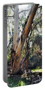 Santa Barbara Eucalyptus Forest Portable Battery Charger