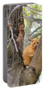 Scared Up A Tree Portable Battery Charger