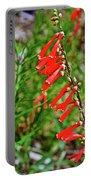 Scarlet Bugler In Rancho Santa Ana Botanic Garden In Claremont-californi Portable Battery Charger