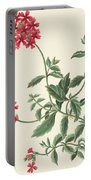Scarlet Flowered Vervain Portable Battery Charger