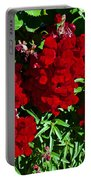 Scarlet Snapdragons At Pilgrim Place In Claremont-california  Portable Battery Charger
