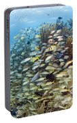 Schools Of Grunts, Snappers, Tangs Portable Battery Charger