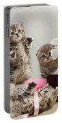 Scottish Fold Cats Portable Battery Charger