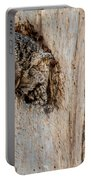 Screech Owl In A Tree Portable Battery Charger