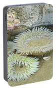 Sea Anemones Portable Battery Charger