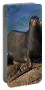 Sea Lion Exit Portable Battery Charger