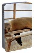 sea lion on a bench in Puerto Ayora, Santa Cruz Island, Galapagos Portable Battery Charger