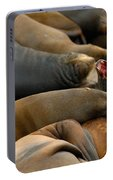 Sea Lions At Pier 39 San Francisco Portable Battery Charger