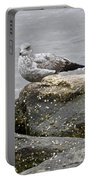 Seagull Sitting On Jetty Portable Battery Charger