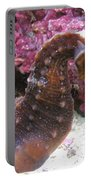 Seahorse4 Portable Battery Charger