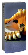 Seashell Cymatium Lotoium Portable Battery Charger