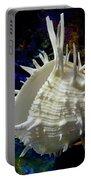 Seashell Spondylus Americanus Portable Battery Charger
